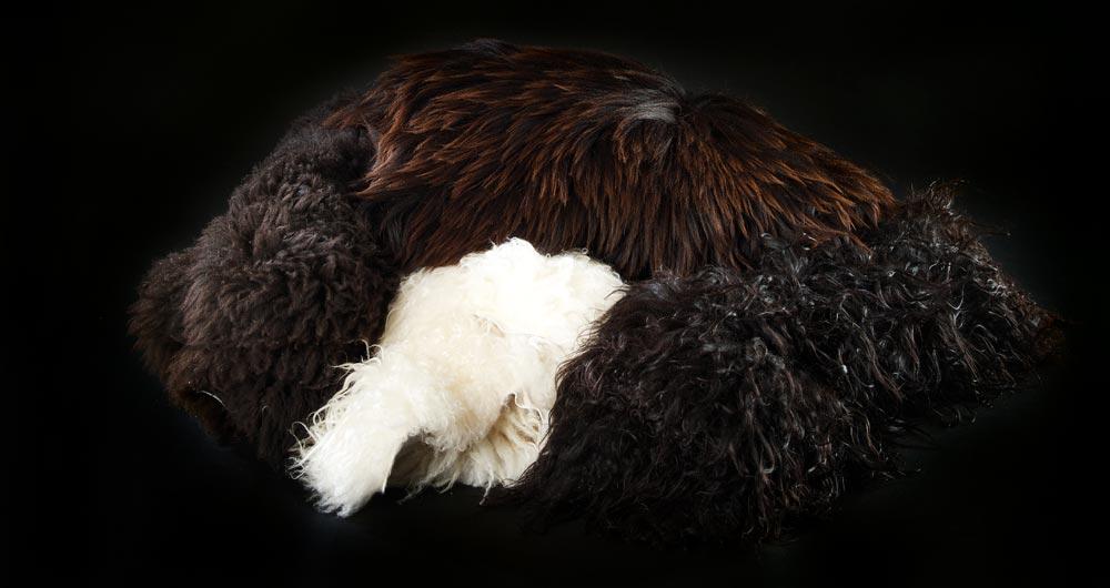 http://www.zoologisk-konservator.dk/wp-content/uploads/2016/09/skind-3.jpg