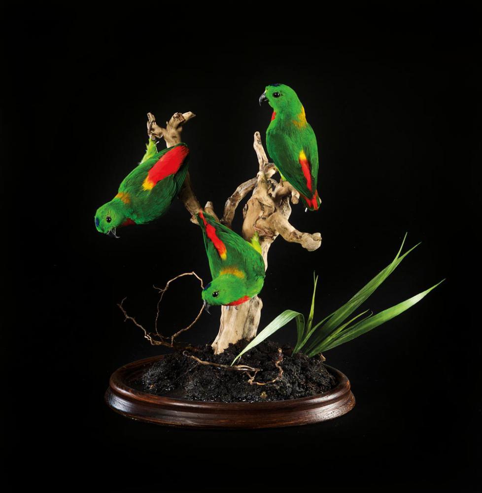 flagermus-papegoeje